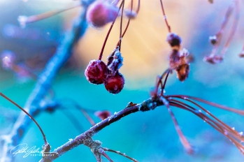 frosty-berries-6