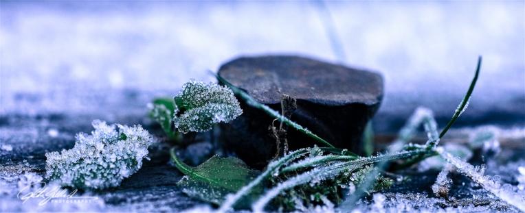 frosty-flake-3