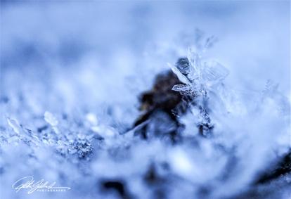 frosty-flake