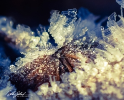 frosty-morning-28-of-99