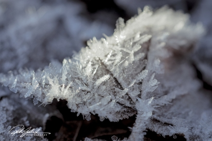 frosty-morning-37-of-99