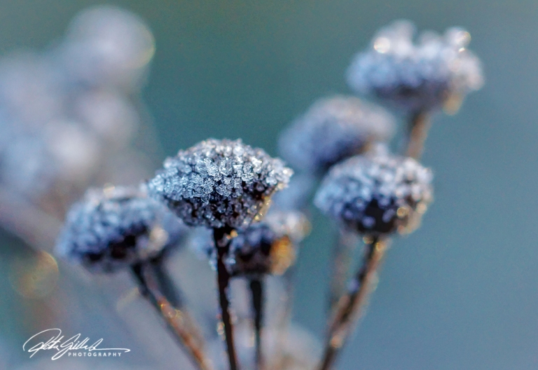 frosty-morning-82-of-99