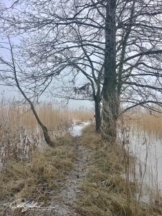 misty-morning-by-thye-sea-16-of-23