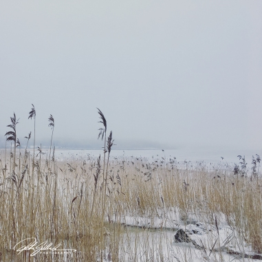 misty-morning-by-thye-sea-22-of-23