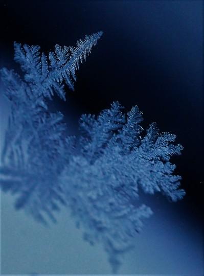frost-flower2