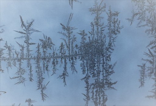 frost-forest