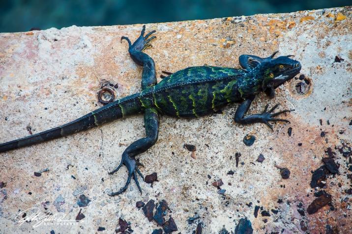 green-lizard-2