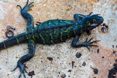 green-lizard-3