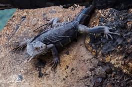 green-lizard-5