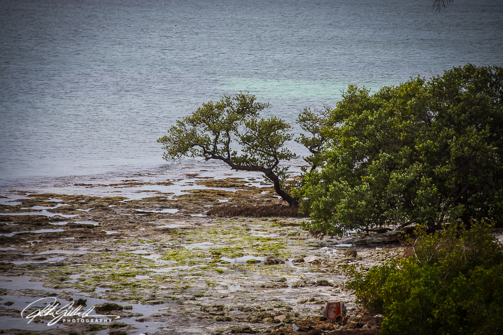 tree-by-the-sea