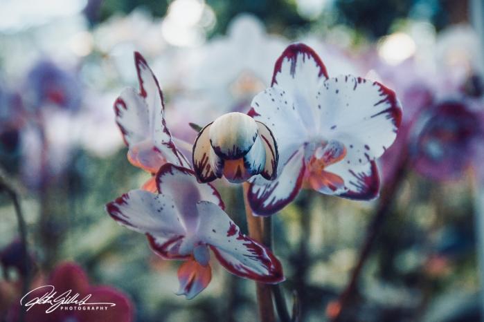 orkidea (1 of 1)