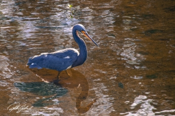 Wakodahatchee Wetland (13 of 154)