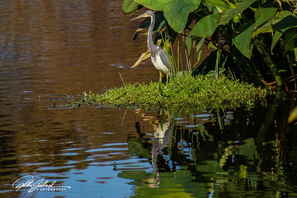 Wakodahatchee Wetland (149 of 154)
