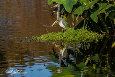Wakodahatchee Wetland (149 of 154)