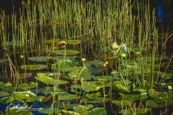 Wakodahatchee Wetland (80 of 154)