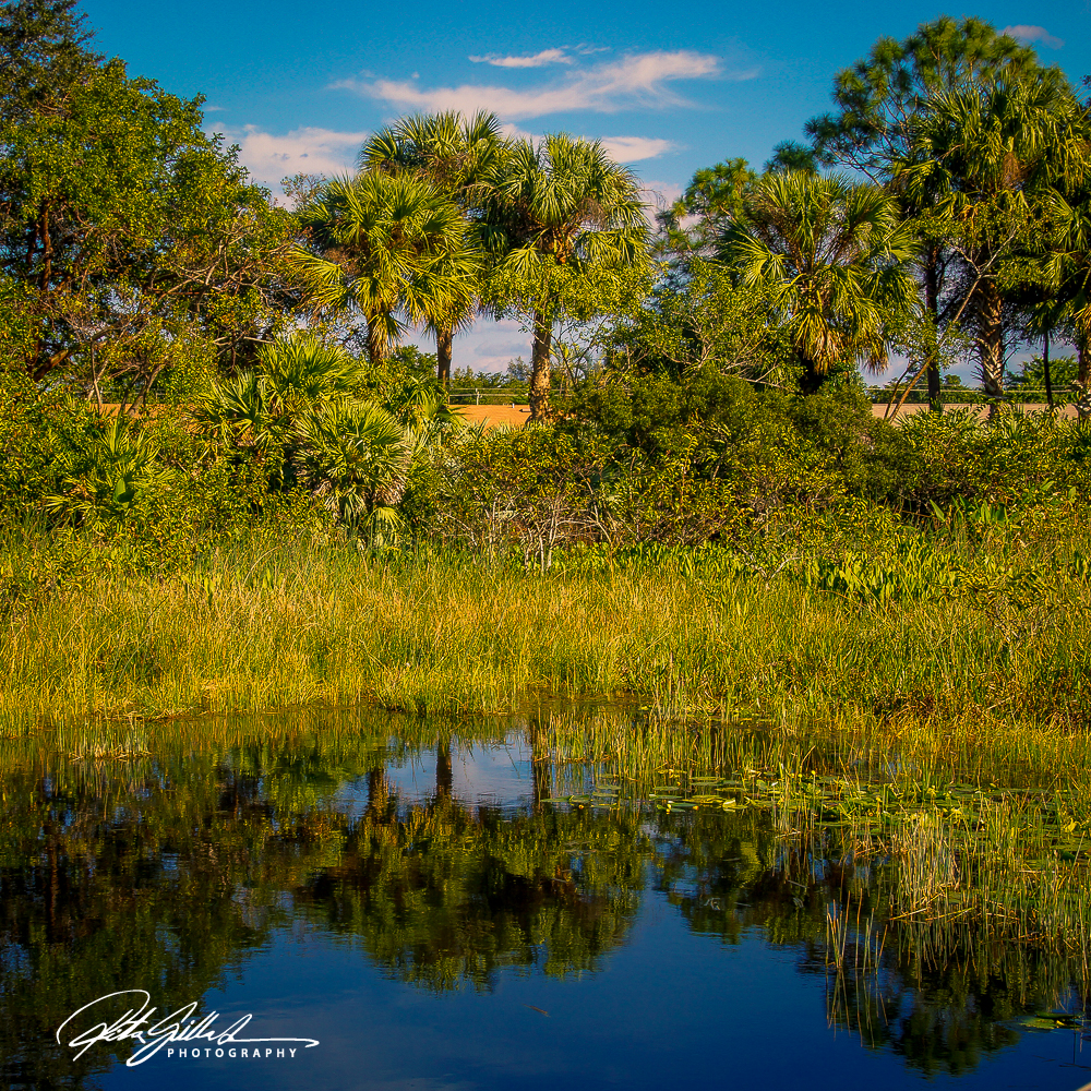 Wakodahatchee Wetland (84 of 154)