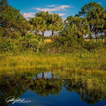 Wakodahatchee Wetland (84 of 154)