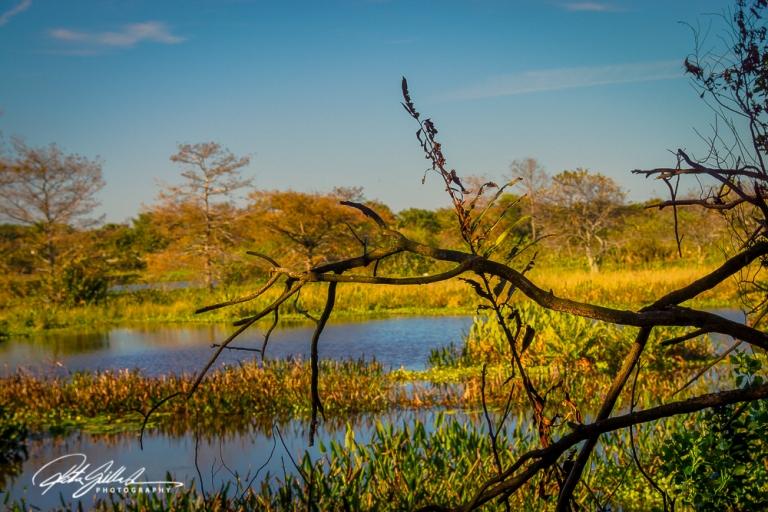 Wakodahatchee Wetland (93 of 154)