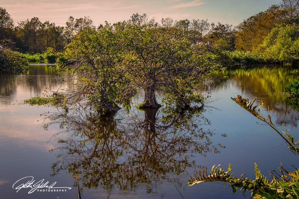 Wakodahatchee Wetland (99 of 154)