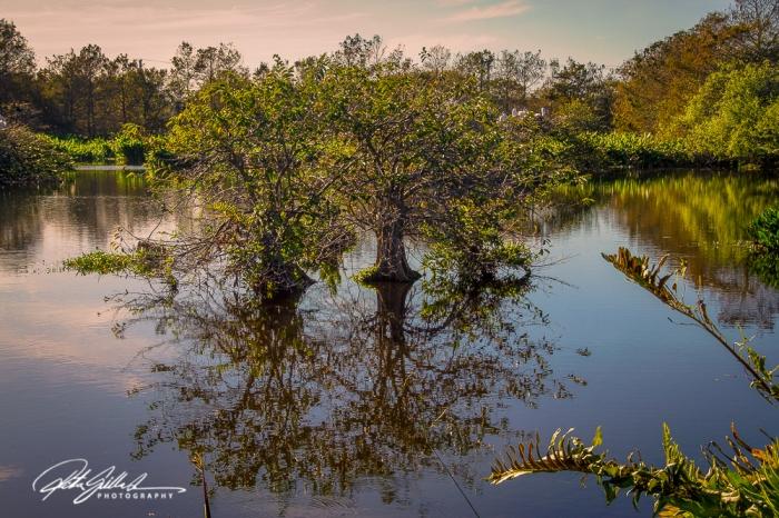Wakodahatchee Wetland (99 of 154)
