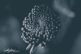 weekend bouquet (22)-2