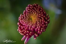 weekend bouquet (22)