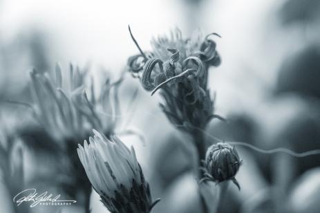 weekend bouquet (24)-2