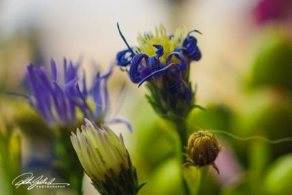 weekend bouquet (24)