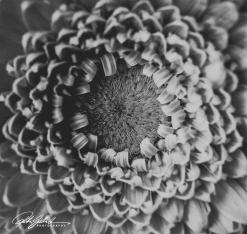 weekend bouquet (3)-2
