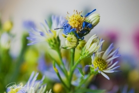 weekend bouquet (30)