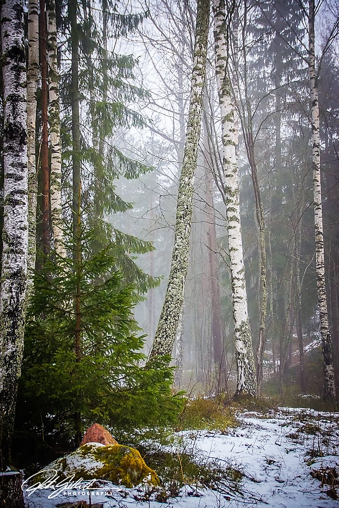 Misty afternoon (13)