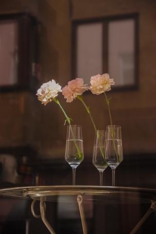 Carnations (1)