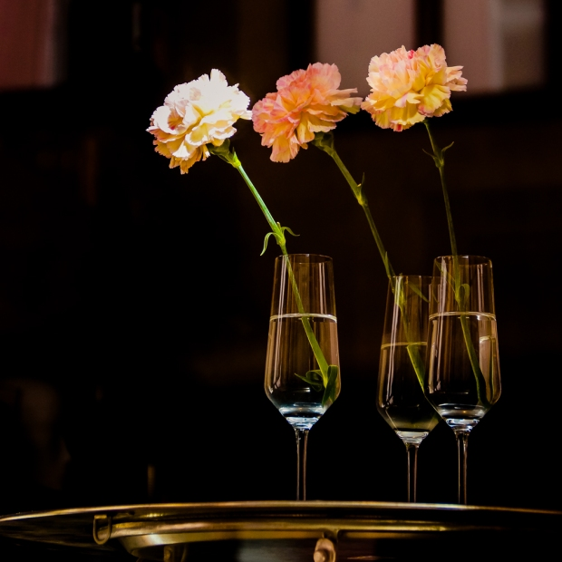 Carnations (2)