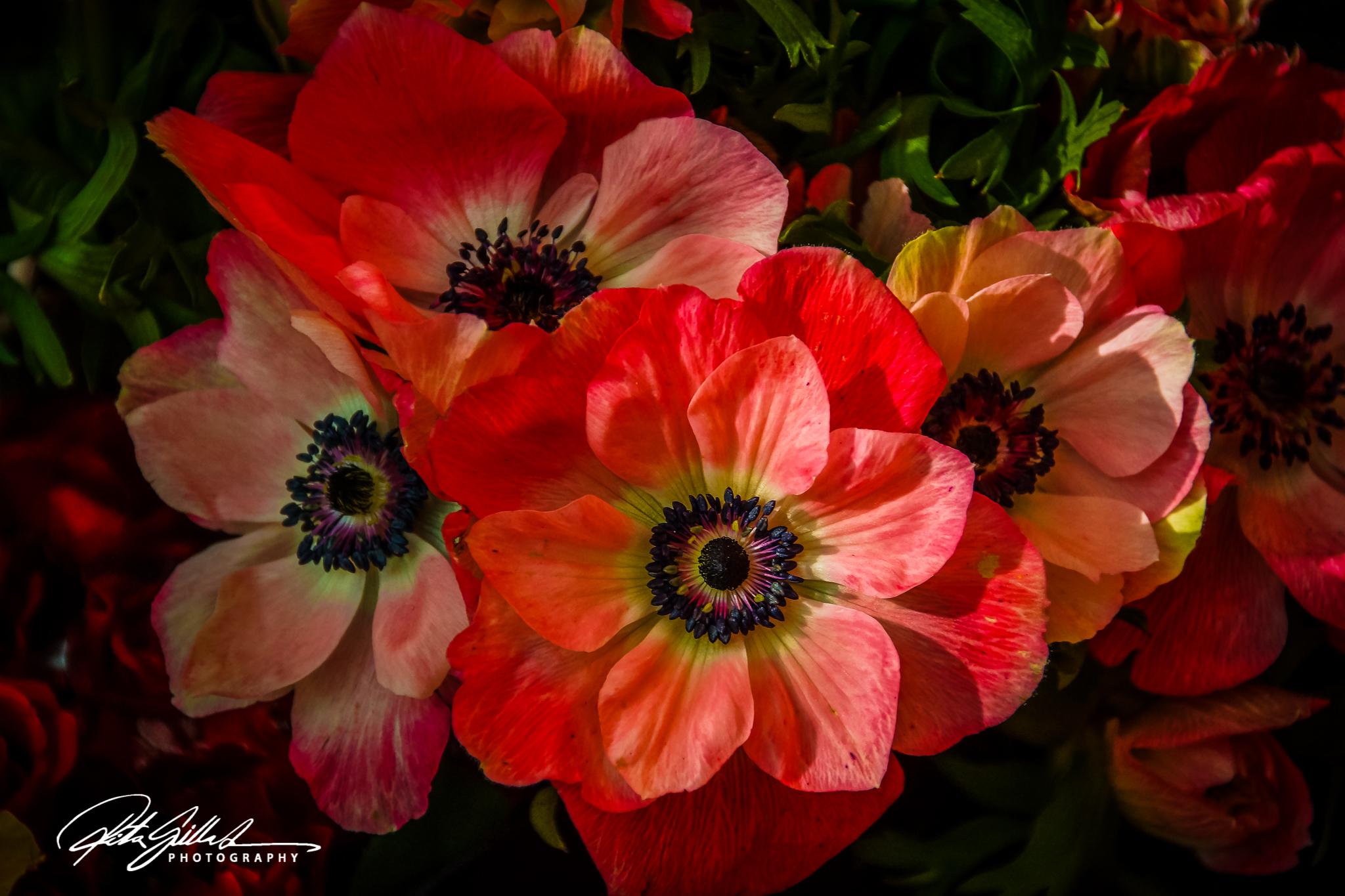 flower power (1 of 31).jpg