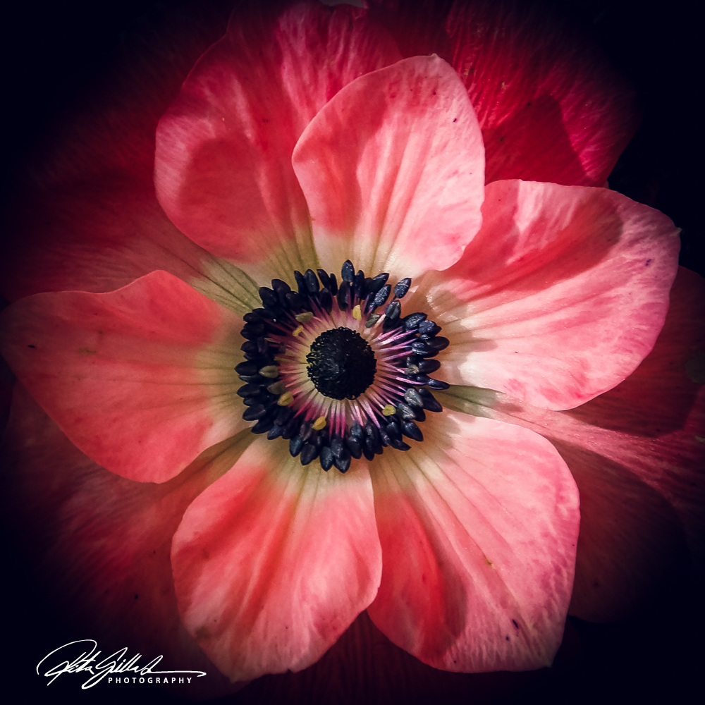 flower power (5 of 35)