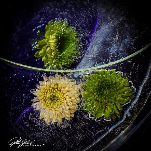Frozen flowers (38 of 63)