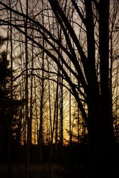 May evening (42)