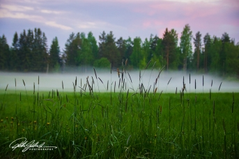 misty summer eve-13