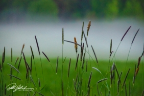 misty summer eve-14