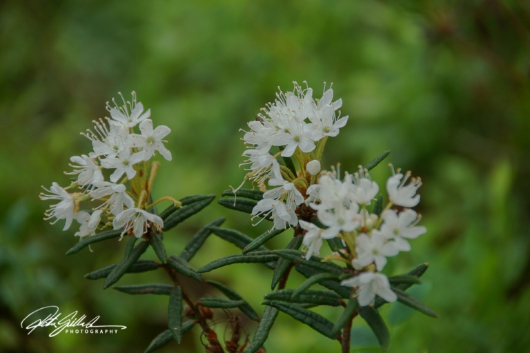 rhododendron park (52 of 53)