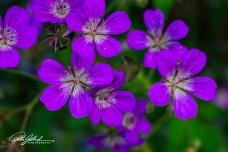 summer flowers (81 of 96)