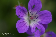 summer flowers (83 of 96)
