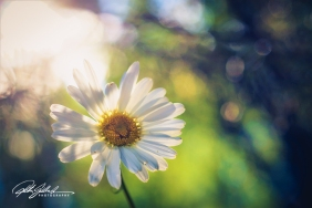 summer flowers (151 of 207)