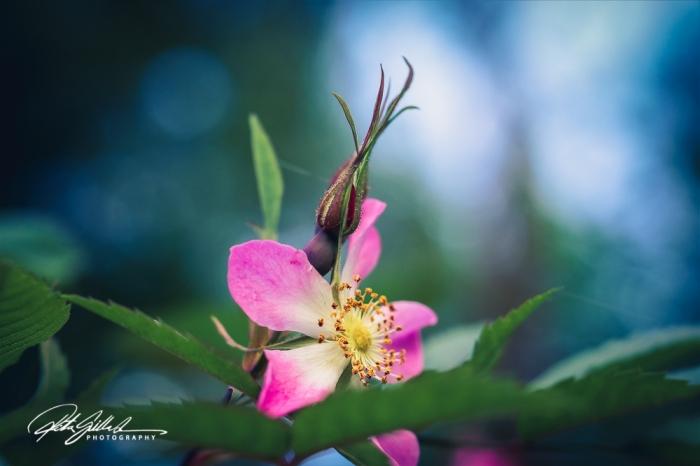 summer flowers (25 of 207)