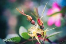 summer flowers (26 of 207)