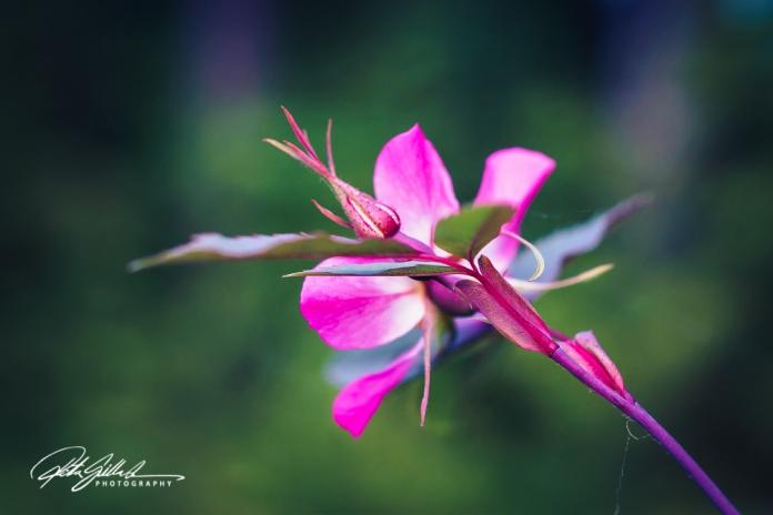 summer flowers (28 of 207)