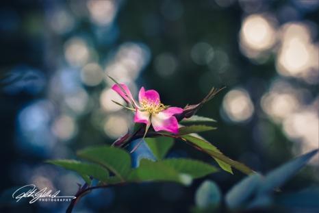 summer flowers (29 of 207)