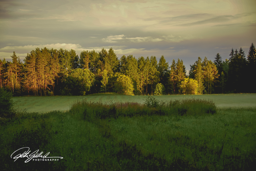 Sunset at tree level-03652