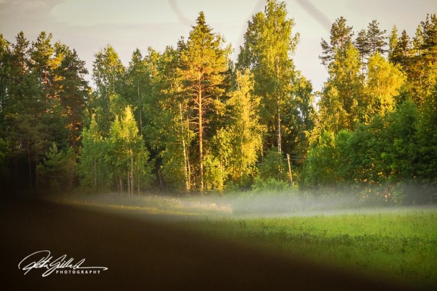 Sunset at tree level-03654