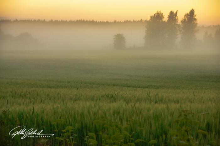 sunset and mist-04422